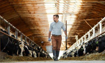 Comment faire venir du public dans votre ferme ?